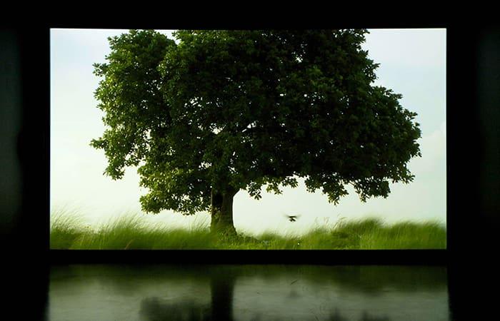The Sovereign Forest av konstnären och filmaren Amar Kanwar